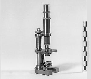 Nettie_Maria_Stevens_microscope