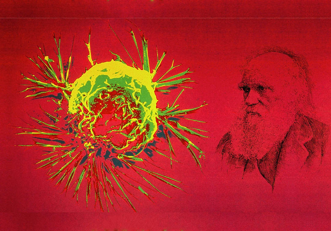 Cancer Ecology: The Big Picture of Tumour Development